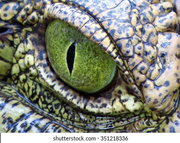 Crocodile eye up close.