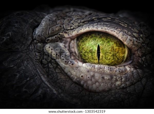 crocodile-eye-scary-green-close-600w-130