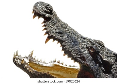 Crocodile head with the mouth large open - isolated object with clipping path.