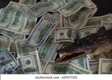crocodile money dollars finance