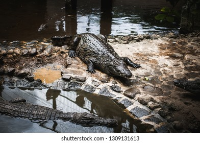 Crocodile Park in Mauritius. La Vanille Nature Park