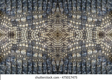 Crocodile skin texture background.