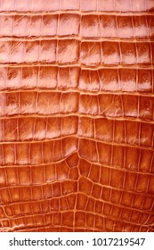 Crocodile skin texture and background.Alligator skin texture.