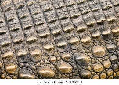 Crocodile skin texture. Shot in South Africa.