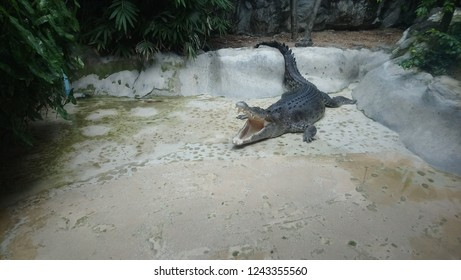 crocodile in the zoo park