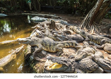Crocodiles in  Bangkok in a summer day