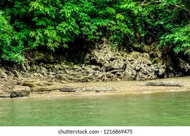 Crocodiles lying on the sand next to the Rio Grijalva. Sumidero canyon, Chiapas, Mexico.