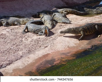 crocodiles of morocco