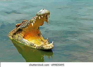 crocodile,Sharp teeth,Amphibians
