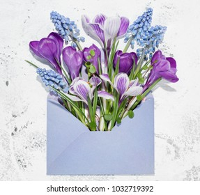 Crocus and Hyacinth muscari flower in envelope