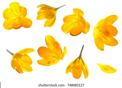 Yellow flower images stock photos vectors shutterstock crocus yellow flower isolated set on white background mightylinksfo