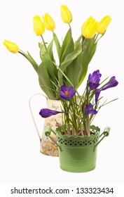 Crocuses, tulips isolated on the white