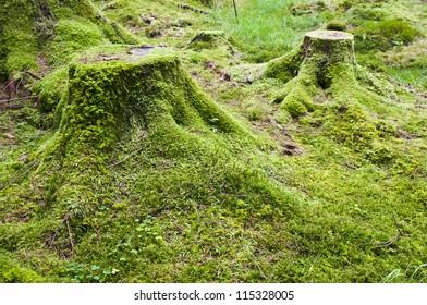 Crone wood, Irish forest
