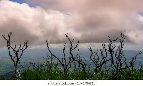 Crooked Woods at Mt Diablo