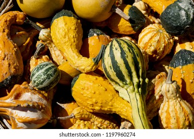 Crookneck squash and various pumpkins and gourds at a fall festival for sale