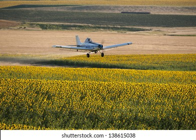 Crop duster flying low over a field of sunflowers spraying pesticide, Montana, USA