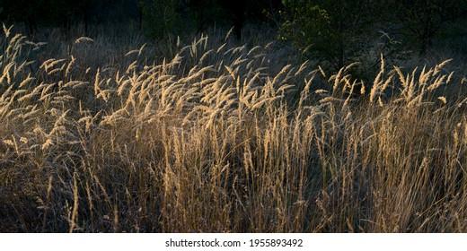 Crop in a field, Kostol, Kladovo, Bor District, Serbia - Shutterstock ID 1955893492