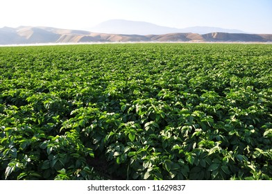 Crop is irrigated with precious water, San Joaquin Valley, California