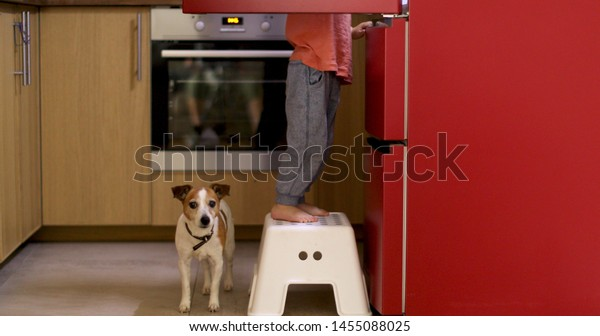 Crop side view of curious toddler standing on stool near opened fridge with Jack Russell Terrier below in kitchen