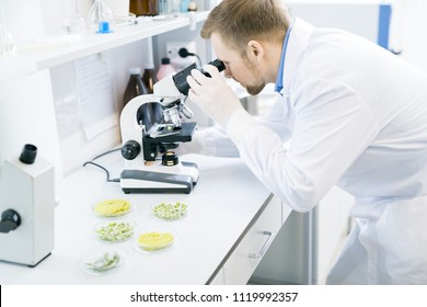 Crop side view of male microbiologist in laboratory coat looking attentively through eyepiece of microscope with food nutrition test object on it