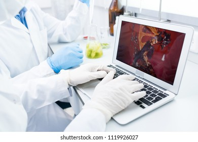 Crop view of microbiologists sitting at table testing samples of green vegetables and looking at computer model of food DNA on laptop screen