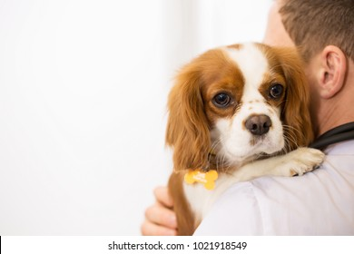 Cropped close up of a cute cavalier king charles spaniel in the hands of a male vet wearing white labcoat copyspace medicine healthy puppies dogs love profession occupation job pet care.