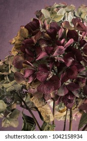 Cropped close up of faded pink hydrangea.