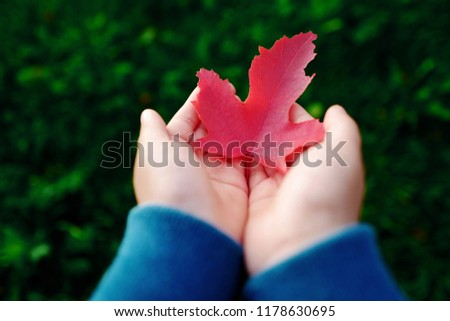 Cropped hands of child holding a red maple leaf against green plants background. Autumn and ecology concept