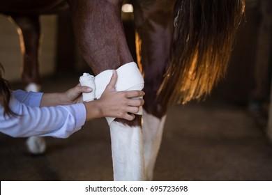 Cropped hands of female vet bandaging horse leg at stable