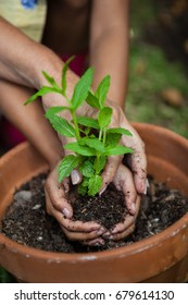 Cropped hands of girl and grandmother planting seedling in pot at backyard