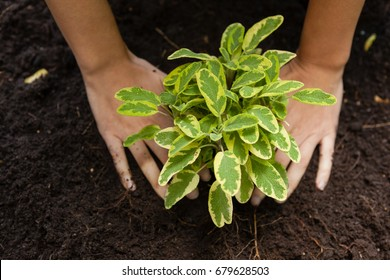 Cropped hands of woman planting on soil in backyard