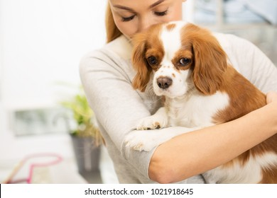 Cropped horizontal shot of a cute beautiful fluffy spaniel puppy in the hands of a young woman copyspace kissing dog cuddling love affection pet care owner canine dog dogs lifestyle.