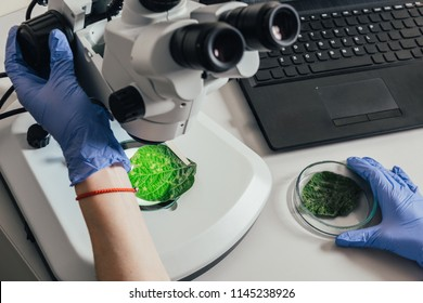 cropped image of biologist examining green leaf under microscope at table with laptop in agro laboratory