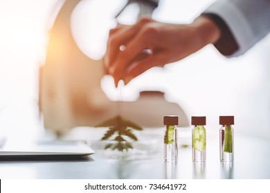 Cropped image of experienced scientist is working in laboratory Doing investigations with leaves and Petri dish Making biological discovering Genetic engineering. Biochemistry, biotechnology, cloning