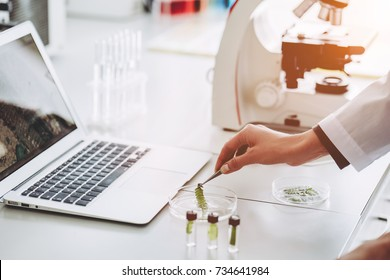 Cropped image of experienced scientist is working in laboratory. Doing investigations with leaves and Petri dish. Making biological discovering. Genetic engineering Biochemistry, biotechnology cloning