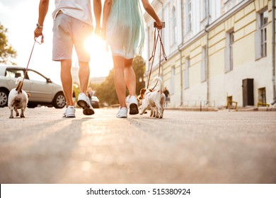 Cropped image of a friendly couple walking dogs together on the city street