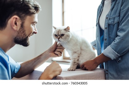 Cropped image of handsome doctor veterinarian at vet clinic is examining cute cat while his owner is standing nearby and holding pet on hands.