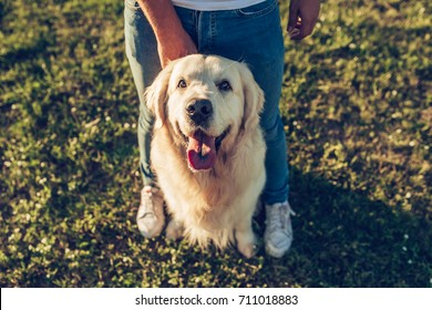 Cropped image of handsome man with his dog golden retriever outdoors. Labrador sitting near his owner on a green grass in sunny day.