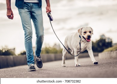 Cropped image of handsome young man with labrador outdoors. Man on a walk in the city with his dog.