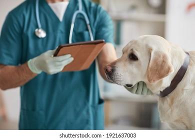 gepflanztes Porträt eines nicht erkennbaren männlichen Tierarztes, der weißen Labrador Hund in der Tierklinik untersucht, Kopienraum