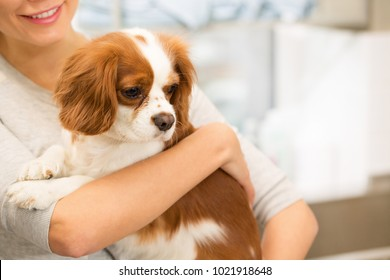 Cropped shot of a happy smiling woman holding her lovely spaniel puppy posing at the vet clinic copyspace medicine healthy canine dogs pets pet care owner love affection animals coziness.