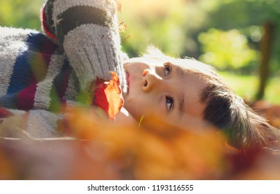 Cropped shot of kid boy laying down on leaves falling under the tree in sunny day ,Child having fun lying on autumn leaves and looking up at sky with curious face,Activities for kid on fall season