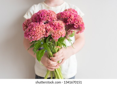 Cropped view of child holding pink and orange cockscomb flowers against neutral wall background (selective focus)