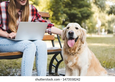 cropped view of girl in casual clothes sitting on wooden bench in park and using laptop while petting golden retriever