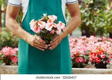 cropped view of male florist holding plant