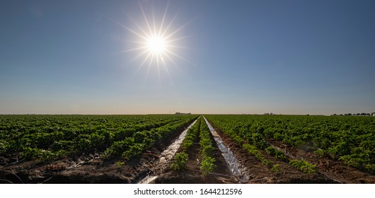Crops being grown in the sunshine