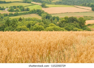 Crops at the end of summer.