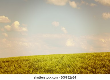 Crops in the field. Image of a wheat field during sunshine on a partly cloudy day. Image has a vintage effect applied.