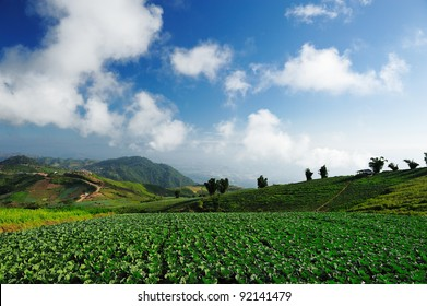 crops in the field ready for harvest in rural China