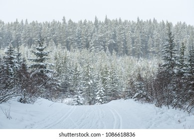 Cross country ski trails through beautiful snow covered winter scenery